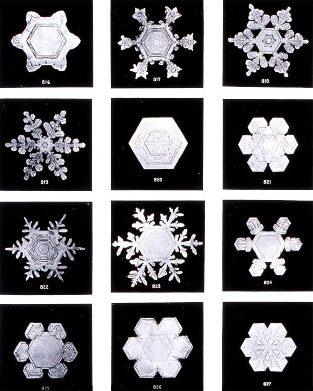 Wilson Bentley snowflakes